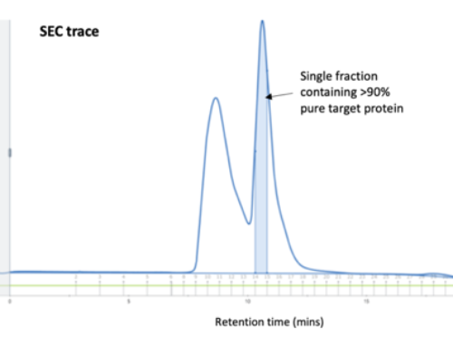 Size Exclusion Chromatography: Size Does Matter