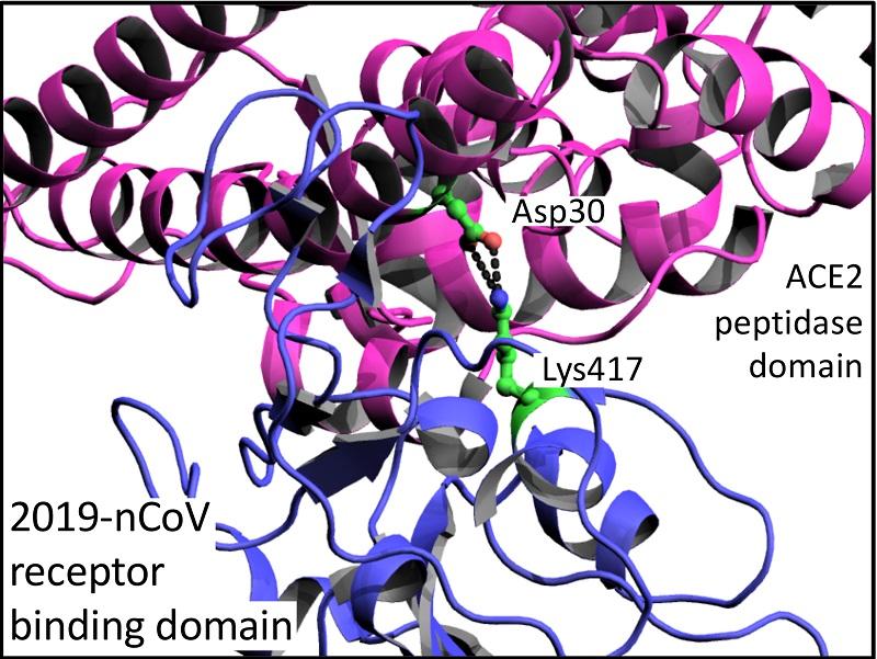 Peak Proteins | Spike Protein | Structural Determination