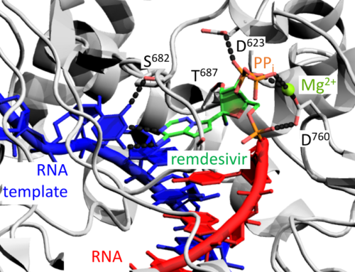 Coronavirus Replication Machinery: the RNA-dependent RNA Polymerase